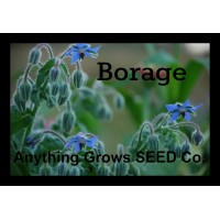 Herb - Borage